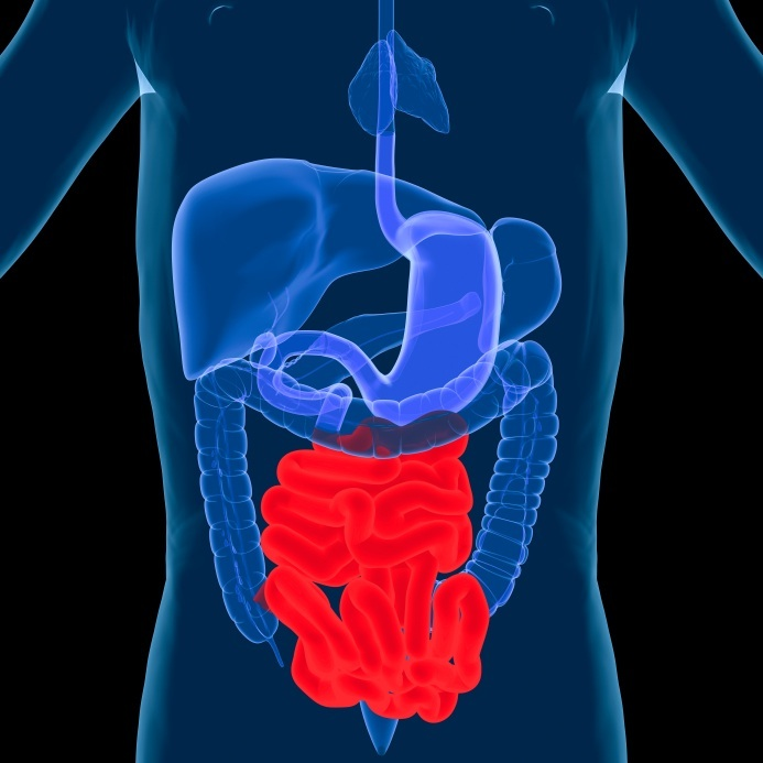 Is Your Digestive System Making You Sick And Fat Dr Mark Hyman