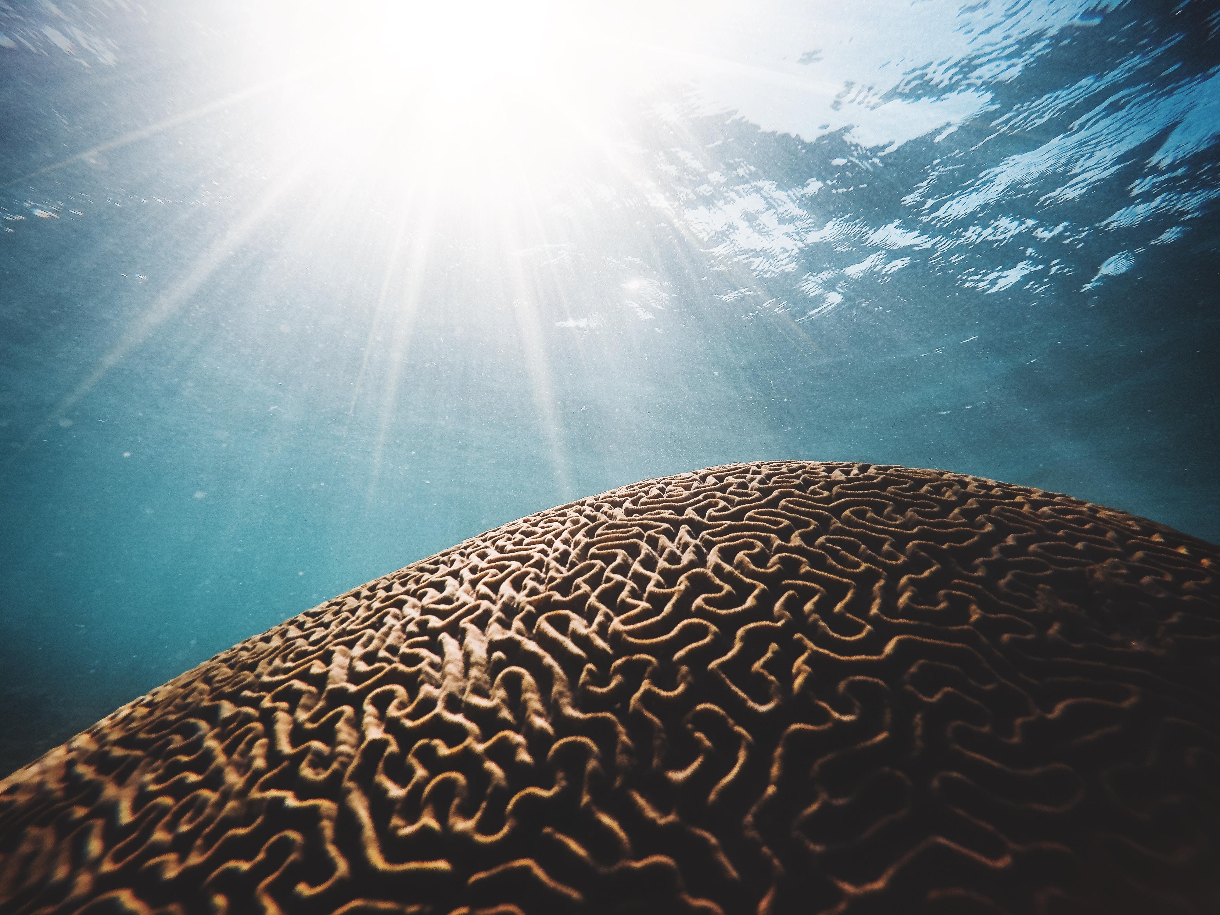 5 Takeaways from My Broken Brain 2 Docu-Series - Dr  Mark Hyman